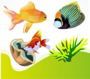 Peluang Usaha Modal Kecil dg Budidaya Ikan Hias Air Tawar